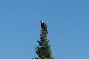Eagle Greets Welcomes Us on Retreat