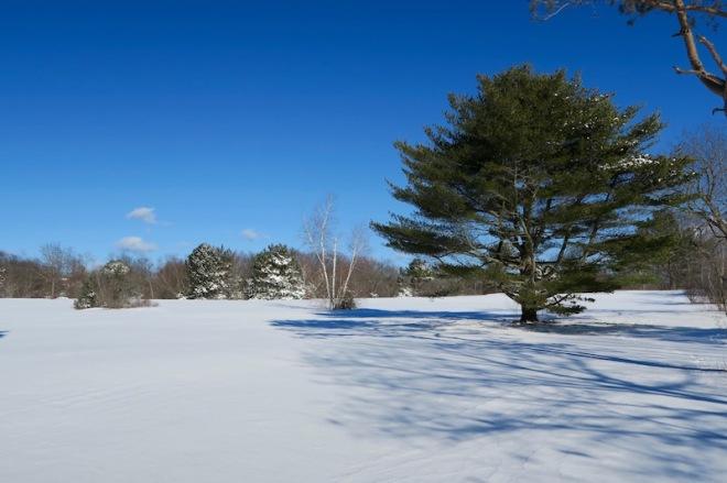 Winter Wonderland Seine Field